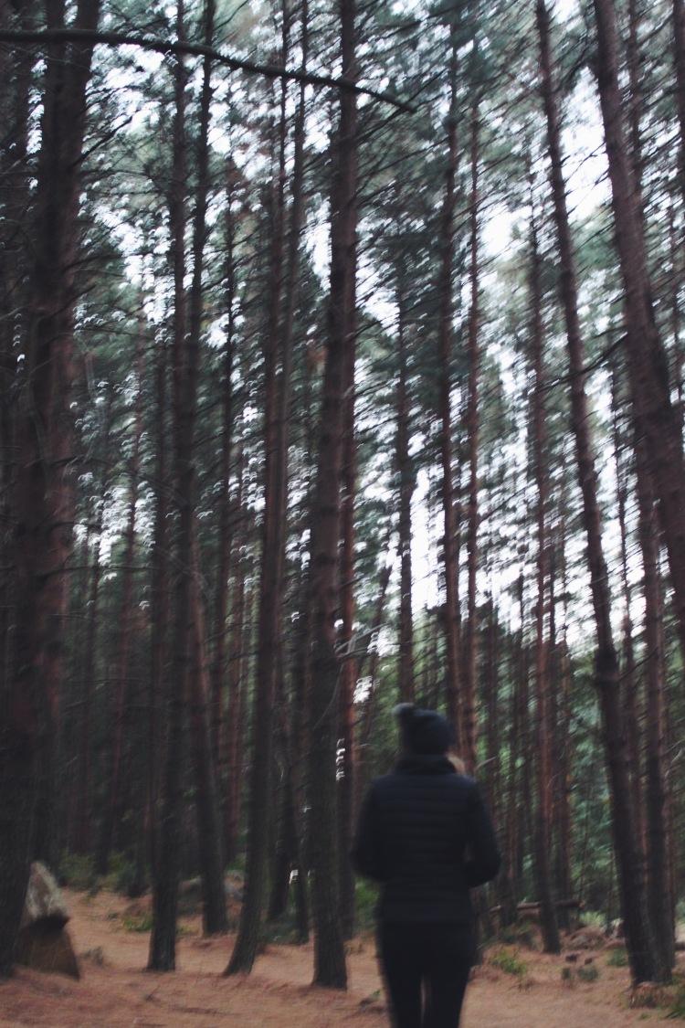 Dunkeld's magical forest